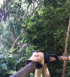 Eco vakantie Costa Rica